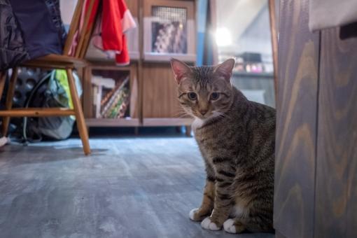 猫カフェ日本語学校